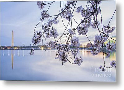 Cherry Blossom Dawning Metal Print by Terry Rowe