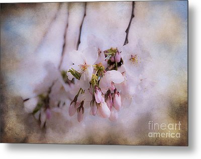 Cherry Blossom Dreams Metal Print by Terry Rowe