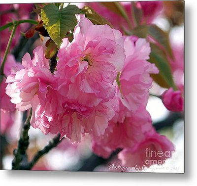 Metal Print featuring the photograph Cherry Blossom by Gena Weiser