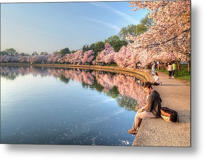 Metal Print featuring the photograph Cherry Blossom Love by Michael Donahue