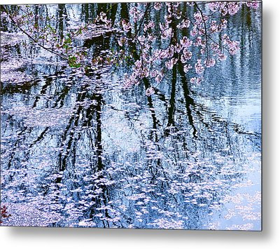 Cherry Blossom Reflections Metal Print