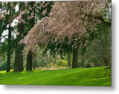 Metal Print featuring the photograph Cherry Blossom by Sabine Edrissi