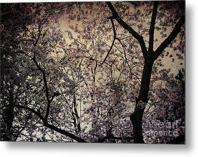 Cherry Blossom Sky Metal Print