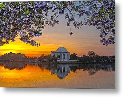 Cherry Blossom Sunrise Washington D.c. Metal Print