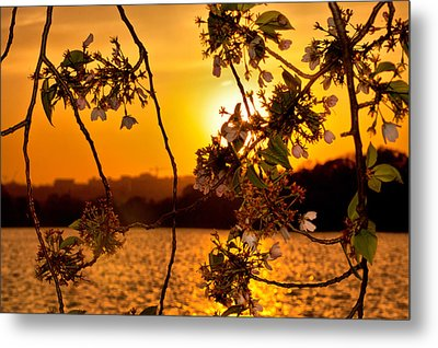 Metal Print featuring the photograph Cherry Blossom Sunset by Mitchell R Grosky