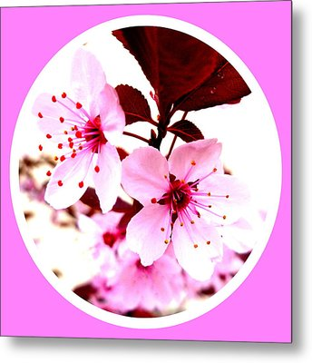 Cherry Blossom Metal Print by The Creative Minds Art and Photography