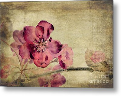 Cherry Blossom With Textures Metal Print by John Edwards