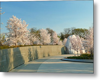 Cherry Blossoms 2013 - 022 Metal Print by Metro DC Photography