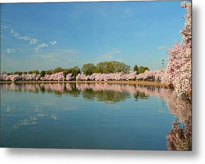 Cherry Blossoms 2013 - 026 Metal Print by Metro DC Photography