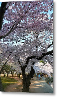 Cherry Blossoms 2013 - 044 Metal Print