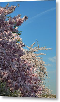 Cherry Blossoms 2013 - 046 Metal Print by Metro DC Photography