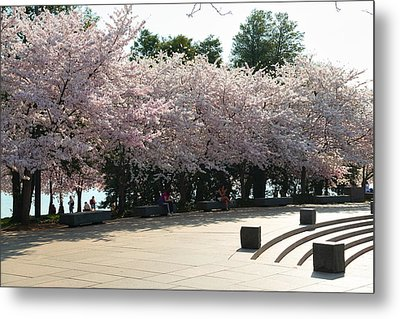 Cherry Blossoms 2013 - 059 Metal Print by Metro DC Photography