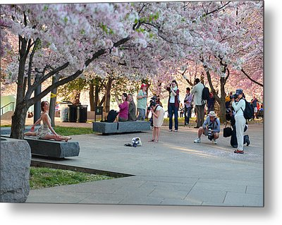 Cherry Blossoms 2013 - 069 Metal Print by Metro DC Photography