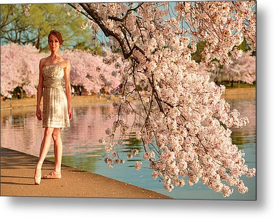 Cherry Blossoms 2013 - 080 Metal Print by Metro DC Photography
