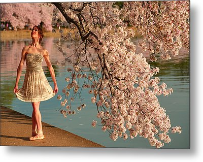 Cherry Blossoms 2013 - 082 Metal Print
