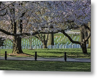 Cherry Blossoms Adorn Arlington National Cemetery Metal Print by Susan Candelario