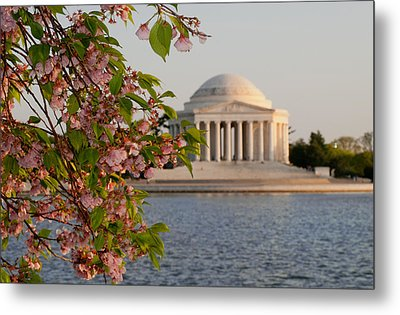 Metal Print featuring the photograph Cherry Blossoms And The Jefferson Memorial 3 by Mitchell R Grosky