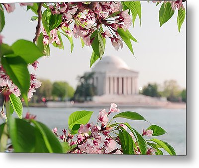 Metal Print featuring the photograph Cherry Blossoms And The Jefferson Memorial by Mitchell R Grosky