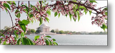 Metal Print featuring the photograph Cherry Blossoms And The Jefferson Memorial Panorama by Mitchell R Grosky
