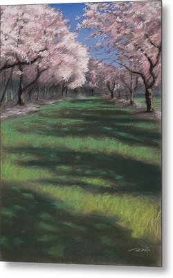 Cherry Blossoms Metal Print by Christopher Reid