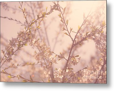 Cherry Blossoms Metal Print by Diane Diederich