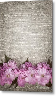 Cherry Blossoms On Linen  Metal Print by Elena Elisseeva