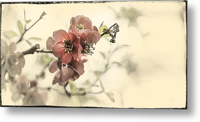 Metal Print featuring the photograph Cherry Blossoms by Peter v Quenter