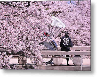 Cherry Blossoms Road Metal Print by Jinjer Templer