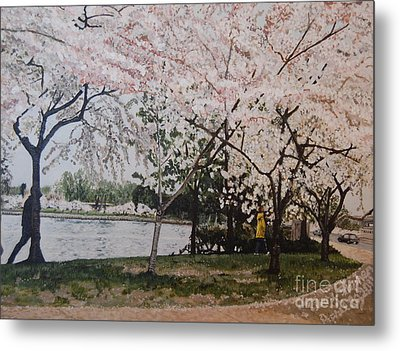 Cherry Blossoms Metal Print by Terry Stephen