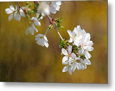 Metal Print featuring the photograph Cherry Blossoms by Trina  Ansel