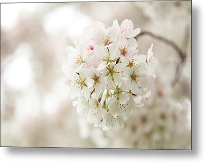Cherry Blossoms - Washington Dc - 0113101 Metal Print by DC Photographer
