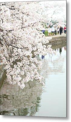 Cherry Blossoms - Washington Dc - 0113104 Metal Print by DC Photographer