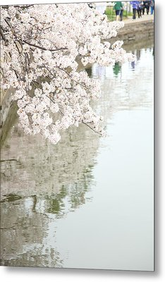 Cherry Blossoms - Washington Dc - 0113105 Metal Print by DC Photographer