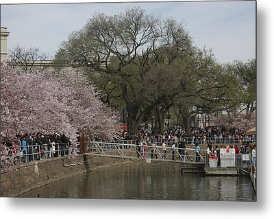 Cherry Blossoms - Washington Dc - 011325 Metal Print by DC Photographer