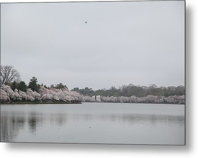 Cherry Blossoms - Washington Dc - 011397 Metal Print by DC Photographer