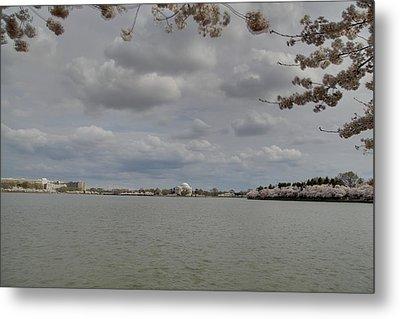 Cherry Blossoms With Jefferson Memorial - Washington Dc - 011319 Metal Print