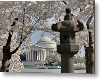 Cherry Blossoms With Jefferson Memorial - Washington Dc - 011325 Metal Print by DC Photographer