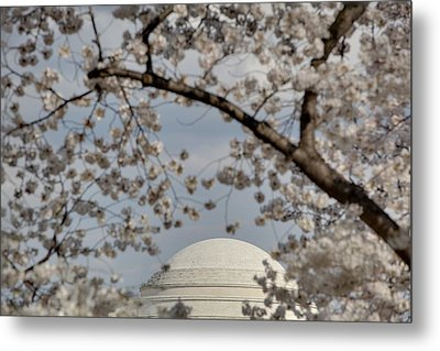 Cherry Blossoms With Jefferson Memorial - Washington Dc - 011331 Metal Print by DC Photographer