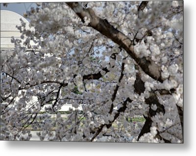 Cherry Blossoms With Jefferson Memorial - Washington Dc - 011333 Metal Print by DC Photographer