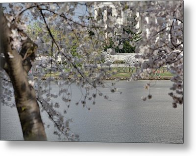 Cherry Blossoms With Jefferson Memorial - Washington Dc - 011336 Metal Print by DC Photographer