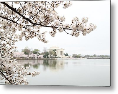 Cherry Blossoms With Jefferson Memorial - Washington Dc - 011344 Metal Print by DC Photographer