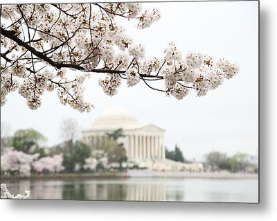 Cherry Blossoms With Jefferson Memorial - Washington Dc - 011346 Metal Print by DC Photographer