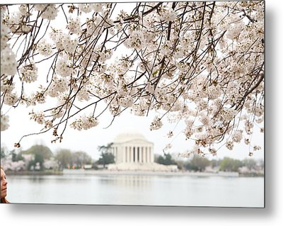 Cherry Blossoms With Jefferson Memorial - Washington Dc - 011348 Metal Print by DC Photographer