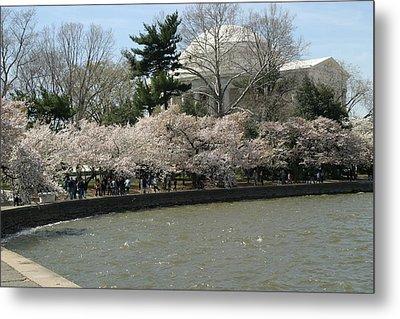 Cherry Blossoms With Jefferson Memorial - Washington Dc - 01139 Metal Print