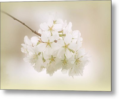 Cherry Tree Blossoms Metal Print by Sandy Keeton