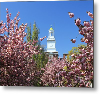 Metal Print featuring the photograph Cherry Trees And Village Hall by Jose Oquendo