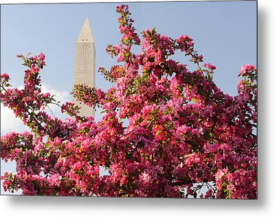 Metal Print featuring the photograph Cherry Trees And Washington Monument 5 by Mitchell R Grosky