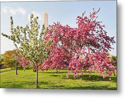 Metal Print featuring the photograph Cherry Trees And Washington Monument Three by Mitchell R Grosky