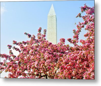 Metal Print featuring the photograph Cherry Trees And Washington Monument Two by Mitchell R Grosky