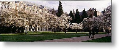 Cherry Trees In The Quad Metal Print